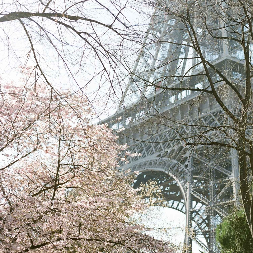 A Cherry Blossom Engagement in Paris